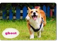 選狗玩具有撇步!改善愛犬「撒嬌亂咬」行為