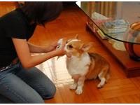 擦腳就低吼 動物行為師只花兩周讓狗乖乖伸腳