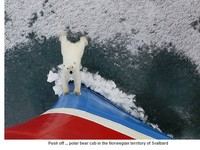 暖化害北极熊饿死成「毛毯」?学者段煦直击:是