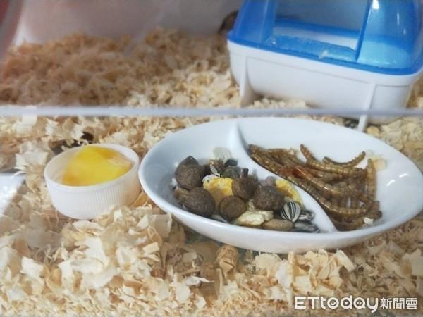 ▲西班牙睡鼠主食。(圖/網友范小姐提供,請勿隨意翻拍,以免侵權。)