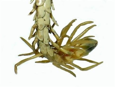 蛇的身体+蜘蛛的屁股,这是啥碗糕? | 键盘大柠