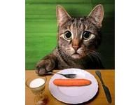跟著主人吃素 貓咪營養不良差點死亡