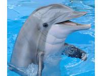 美研究:海豚會像孩子一樣 因單純高興發出尖叫
