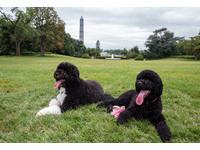 「白宮第一犬」太紅 「公務」忙到蜜雪兒排行程
