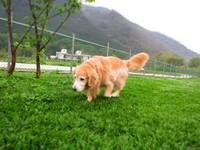 千坪大草地、專屬梳洗台 「逗號民宿」打造寵物樂園
