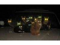 別再因無知而嚇自己! 揭開貓眼睛在黑暗中發亮秘密