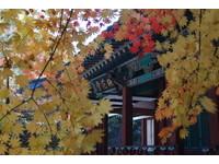 浪漫破表!韓國內嶽山紅葉相依 形成「丹楓隧道」