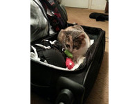 「記得把我和玩具帶上!」 主人打包、貓窩進行李箱