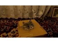 貓咪獨佔紙箱 霸氣宣示:這是我的!