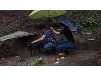 颱風天下鄉替流浪狗打疫苗 雨水溶化警戒的心