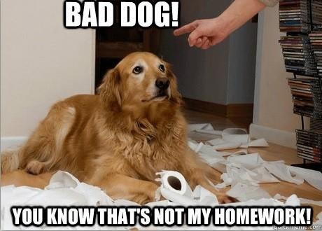 怎么叫都叫不来? 原来狗的世界没有「名字」