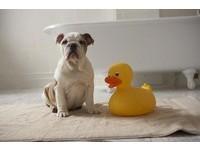 幫狗洗澡像打仗 又不想送美容院怎麼辦?