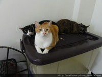 癌末主人替愛貓找新家 寵物溝通師聽見貓咪心聲淚滿面