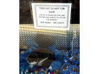 18歲老貓決定住在「櫥窗」 商店老闆:牠是非賣品
