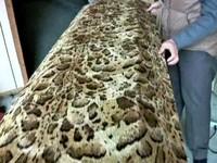 貼心女兒猝死 家人打造另類豹紋棺材