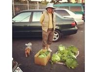 乖巧西施犬「圓仔」 陪老奶奶賣菜不離不棄