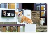 米克斯變身餐旅業大亨 經營「5熊的家」寵物友善民宿