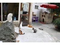 地中海設計的咖啡廳 與32隻貓咪一起度過悠閒午後