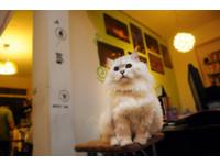 三芝「貓雜貨咖啡館」 貓友間口耳相傳的世外桃源