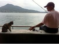 最可愛阻街女郎! 玳瑁貓「小惡魔」等待釣客送魚吃