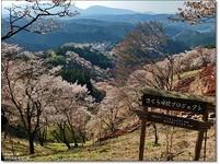 日本奈良吉野山 浪漫脫俗的櫻花美景