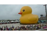 快訊/若天候條件許可 黃色小鴨下午游回埤塘