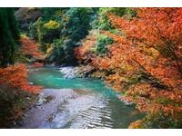 京都旅人/京都紅葉名所-栂尾、槙尾、高雄