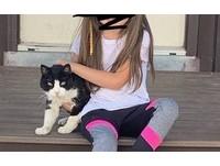 貓咪走失5年奇蹟回家 當年的嬰兒早已長大「開心擁抱喵葛格」