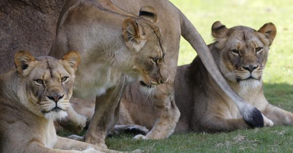 8头孕妇的鼻爪都被砍下南非「黑狮子」巫术至少4次大伊思半年水乳霜蜗牛图片