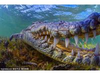 與家人捉魚被襲擊!巴紐11歲男童慘遭4米巨鱷斷頭生吞