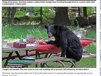 「泰迪熊」開心野餐 卻嚇跑一堆遊客