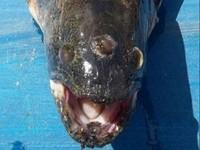 阿根廷捕獲「三眼魚」 噁心怪貌似遭輻射汙染