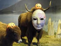 氂牛扮鬼嚇人 木柵動物園萬聖節變新裝