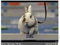 超萌! 瑞士舉辦兔子跨欄錦標賽