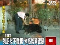 西藏獒犬帶小狗夜遊 民眾嚇到報警