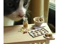 美網站縮小版美食超Q 迷你版有視覺系美味