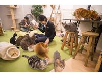 有貓伴讀還能泡溫泉!日本漫畫咖啡店超多選擇