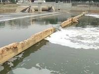 汙染河川又不協助復育 國際團體連署譴責日月光