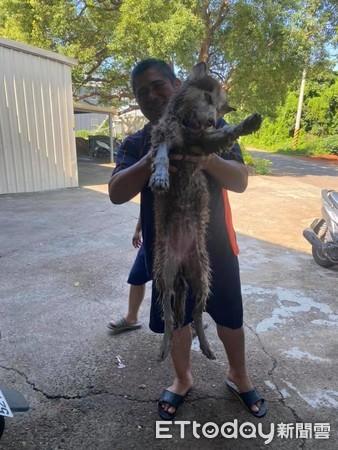溜進水溝玩...爸聽熟悉叫聲拉出「深灰巨老鼠」 幫牠洗澡笑到哭