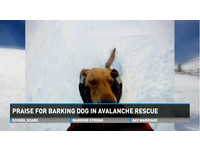 拉布拉多犬「糖糖」雪崩遭埋 靠吠叫聲引人救命