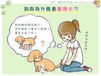 iPet愛寵物/狗狗為什麼會腹積水?