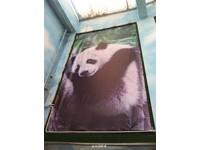 鄭州動物園「衞生條件不佳」 貓熊將被送回四川