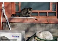 從帝制到現在都對貓好 北京故宮讓流浪貓安居