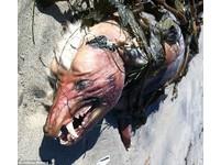 地獄怪獸抓到了?「卓柏卡布拉」最清楚面目曝光!