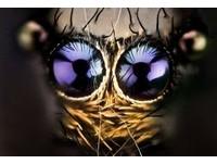 異形的眼睛 「外星蟲蟲」驚悚直擊!
