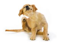 狗狗這裡癢、那裡也癢!如何輕鬆除去煩人的寄生蟲?