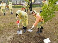 構築綠色廊道 竹北生醫園區栽種60株瓊崖海棠
