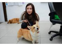 收容至少30隻!正妹廖于瑩休學賺錢 助母救流浪貓狗