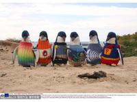 你是編織好手嗎? 企鵝:請織毛衣給我穿!