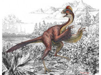 發現新品種偷蛋龍 學者稱牠:來自地獄的雞!